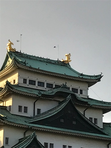 f:id:zaihamizunogotoshi:20191119123118j:image
