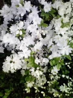 f:id:zaikichi:20090416175110j:image
