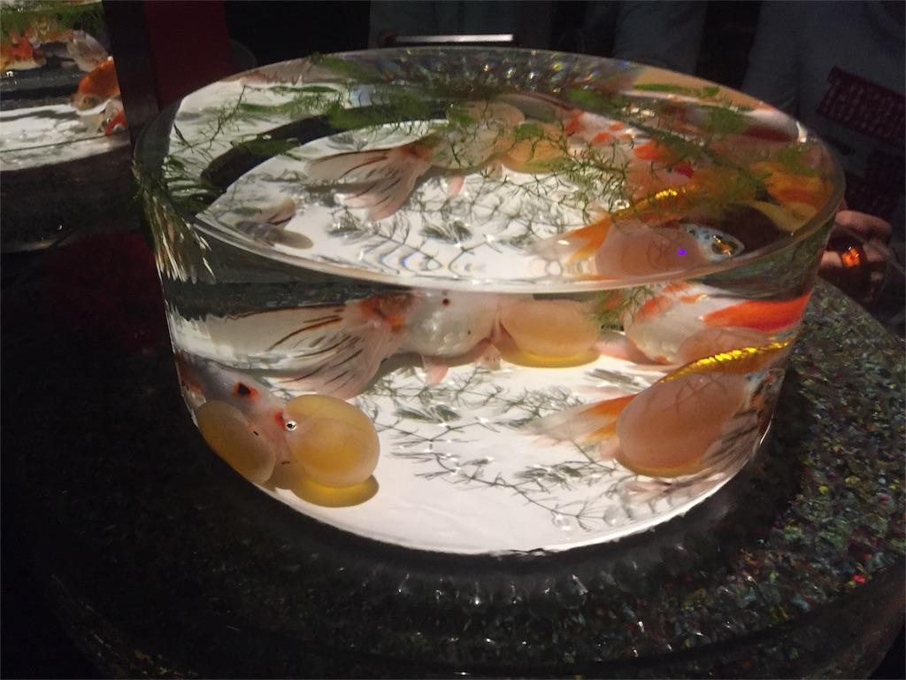 クラゲ金魚