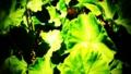[緑] [葉] [植物] [カスタマイズ] 緑の葉っぱ