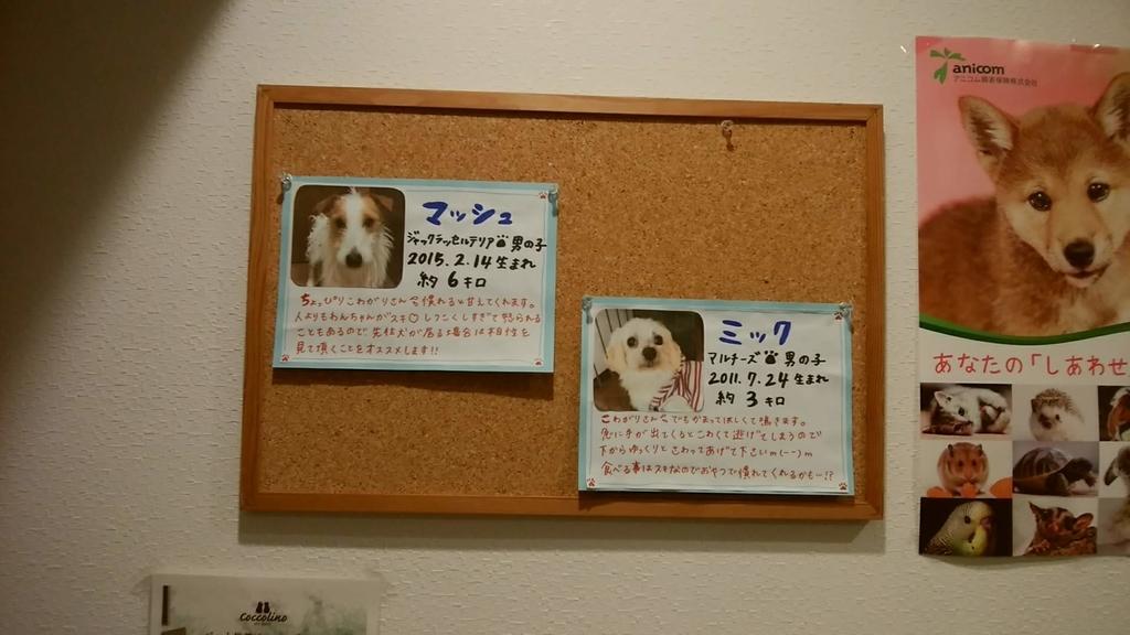 保護 犬 カフェ 堺