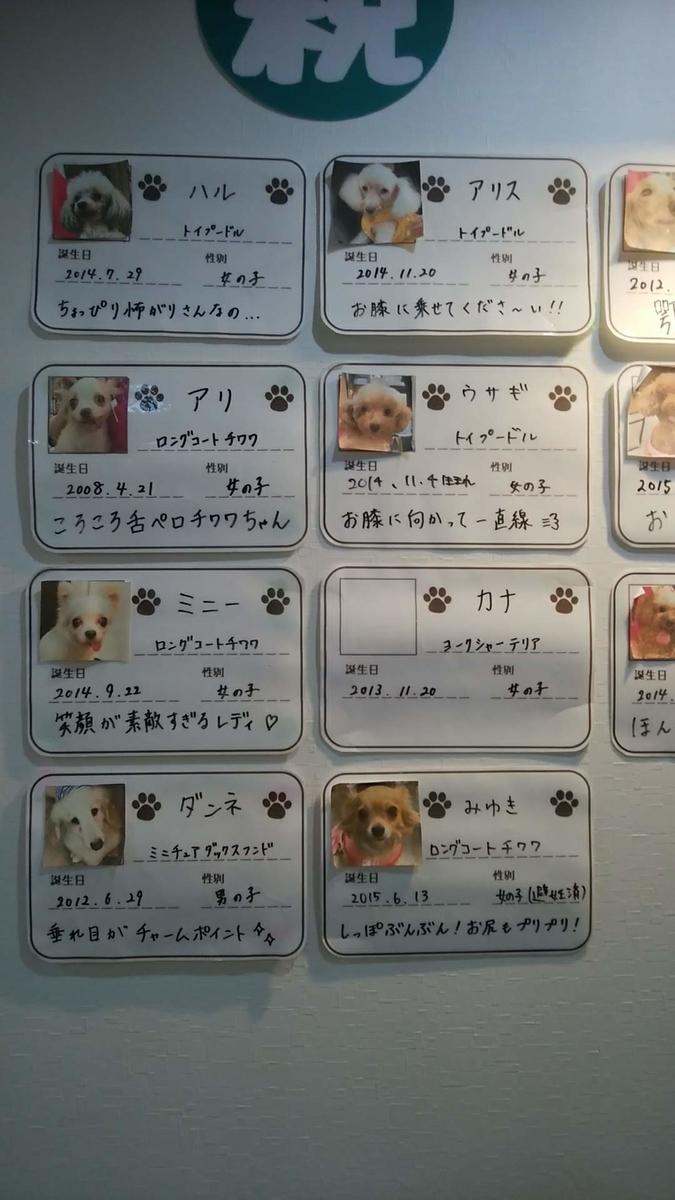 保護 犬 カフェ 鶴橋 店