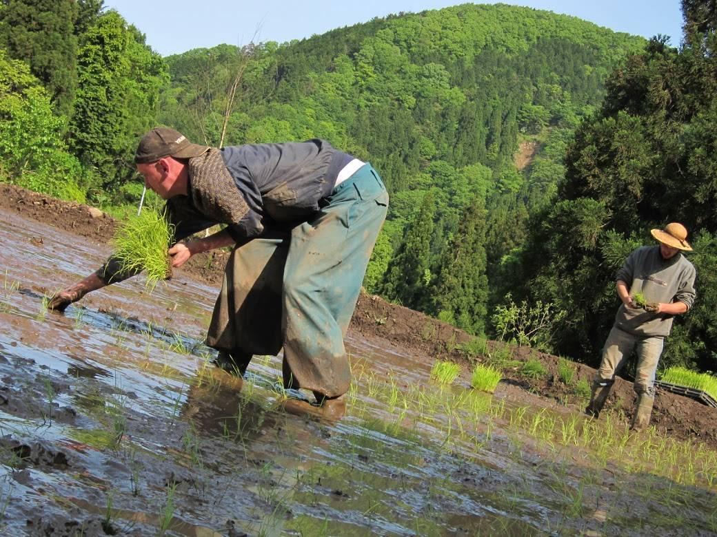 安泰寺での農作業の様子