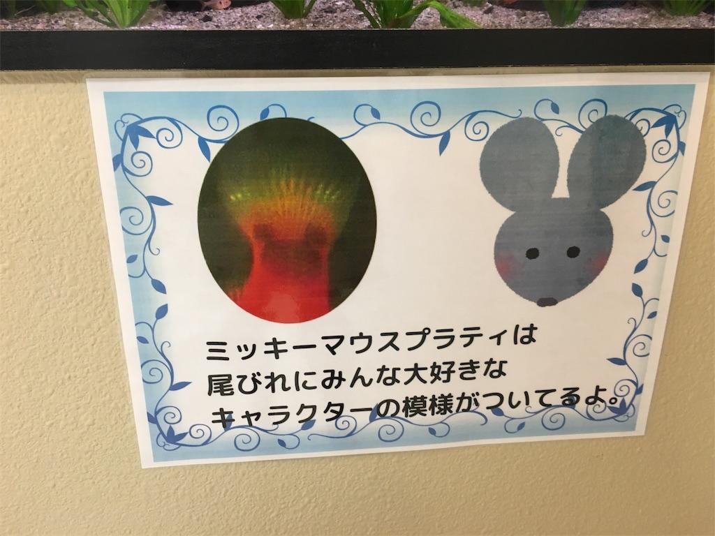 f:id:zashikiuwarashi:20170909232038j:image