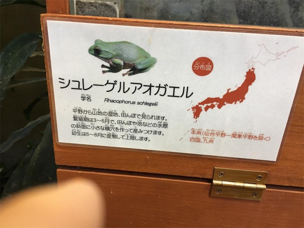 f:id:zashikiuwarashi:20170909232619j:image