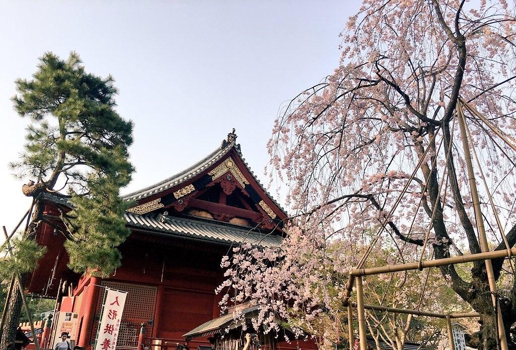 f:id:zashikiuwarashi:20180330214141j:image