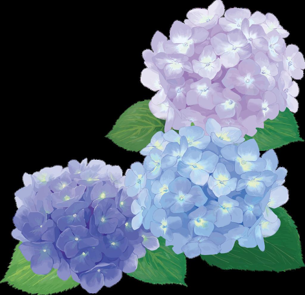 f:id:zatsugakumame:20210603231001p:image