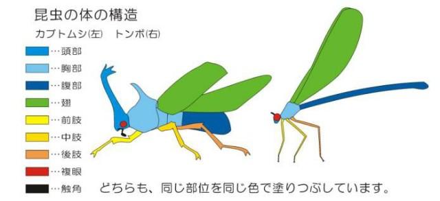f:id:zatsugakurei517:20210420224743j:image