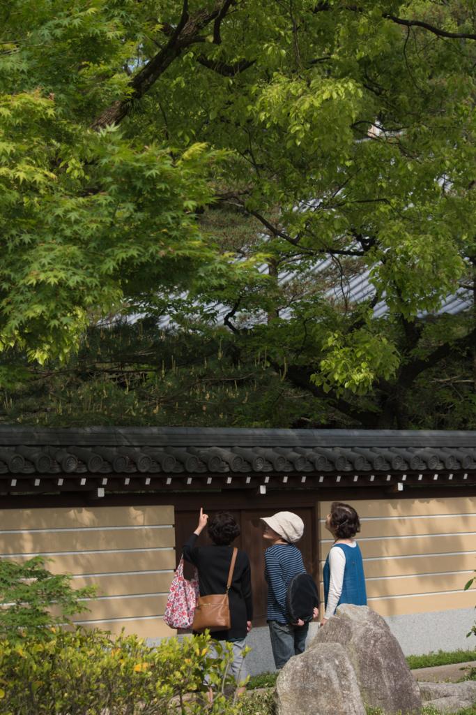 f:id:zawazawawa:20170504074726j:plain