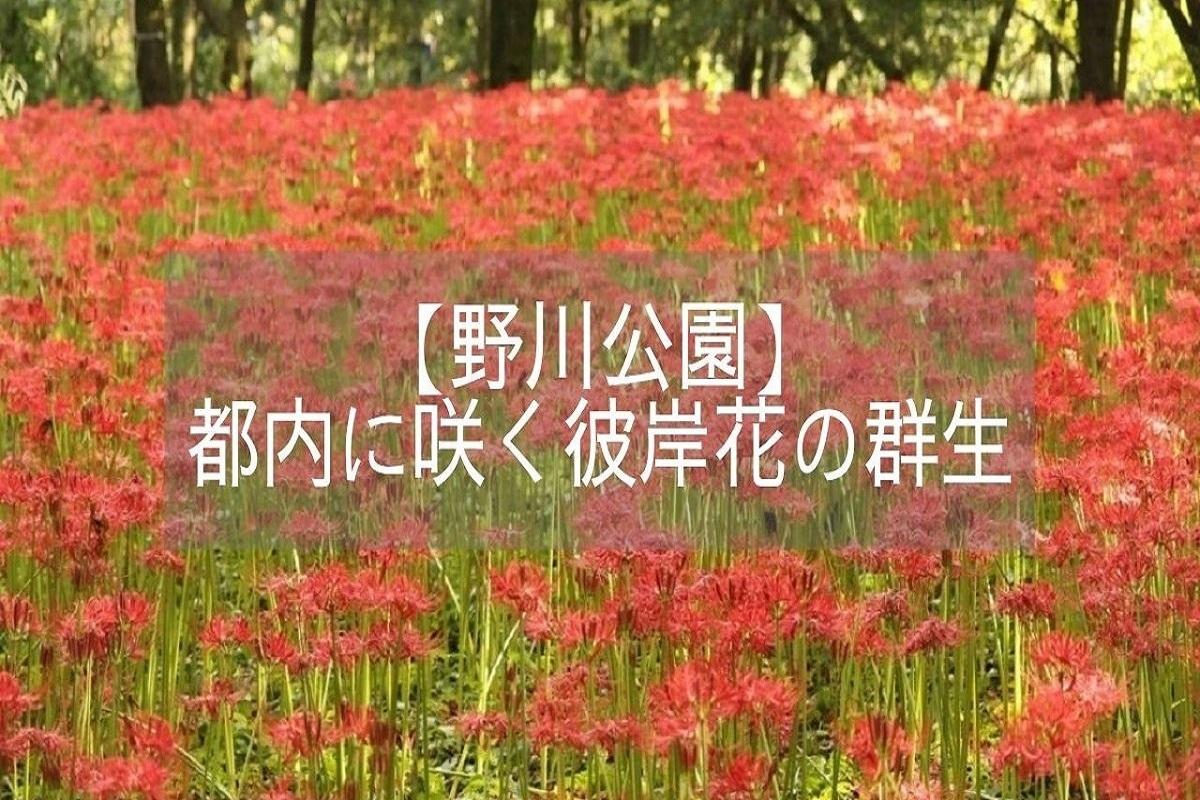 f:id:zekkei-japan:20210531214621j:plain
