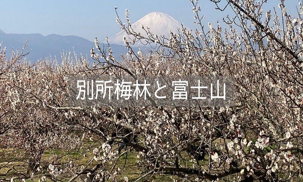 f:id:zekkei-japan:20210620183134j:plain