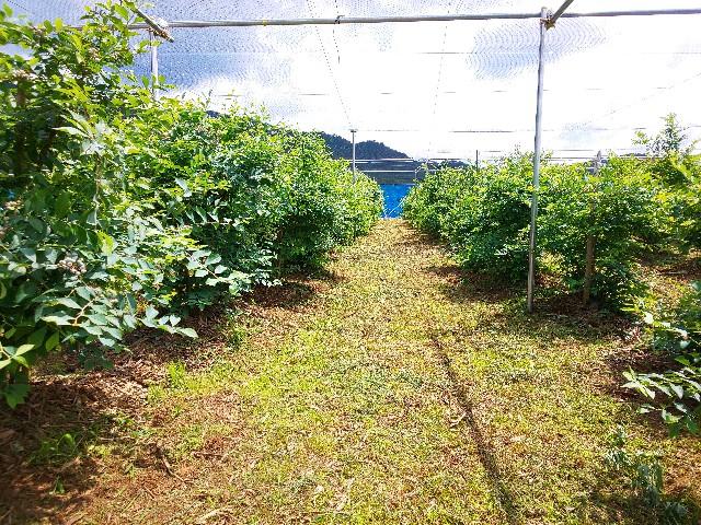 f:id:zenchanfarm:20200621214015j:image