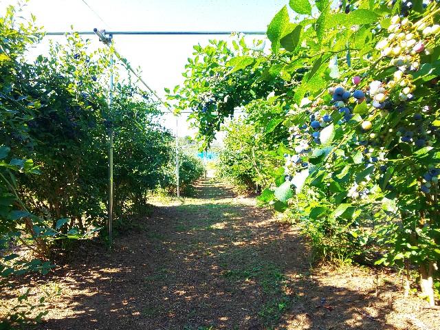 f:id:zenchanfarm:20200816194007j:image