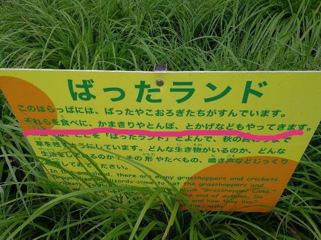 野川公園バッタランド カマキリ