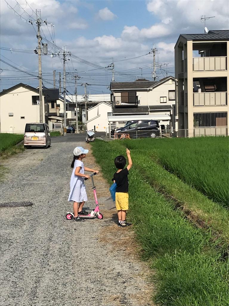 f:id:zetton-shun-yasuda:20190903001944j:image