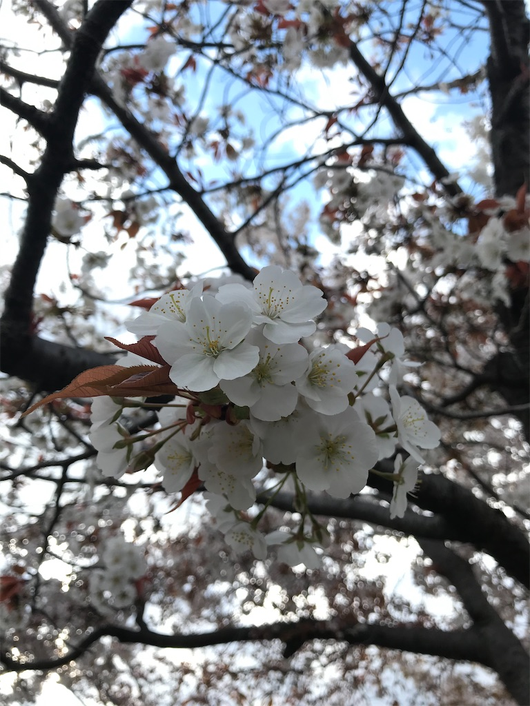 f:id:zetton-shun-yasuda:20200416212841j:image