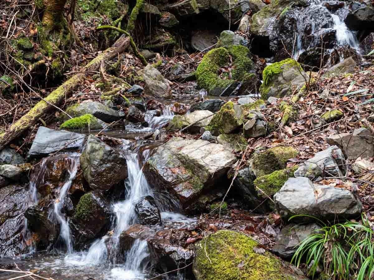 上流域の渓流