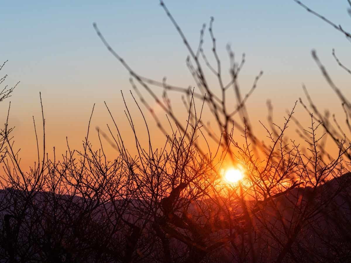 木々の間からの日の出