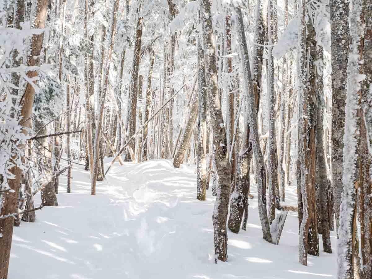 冬の八ヶ岳の森