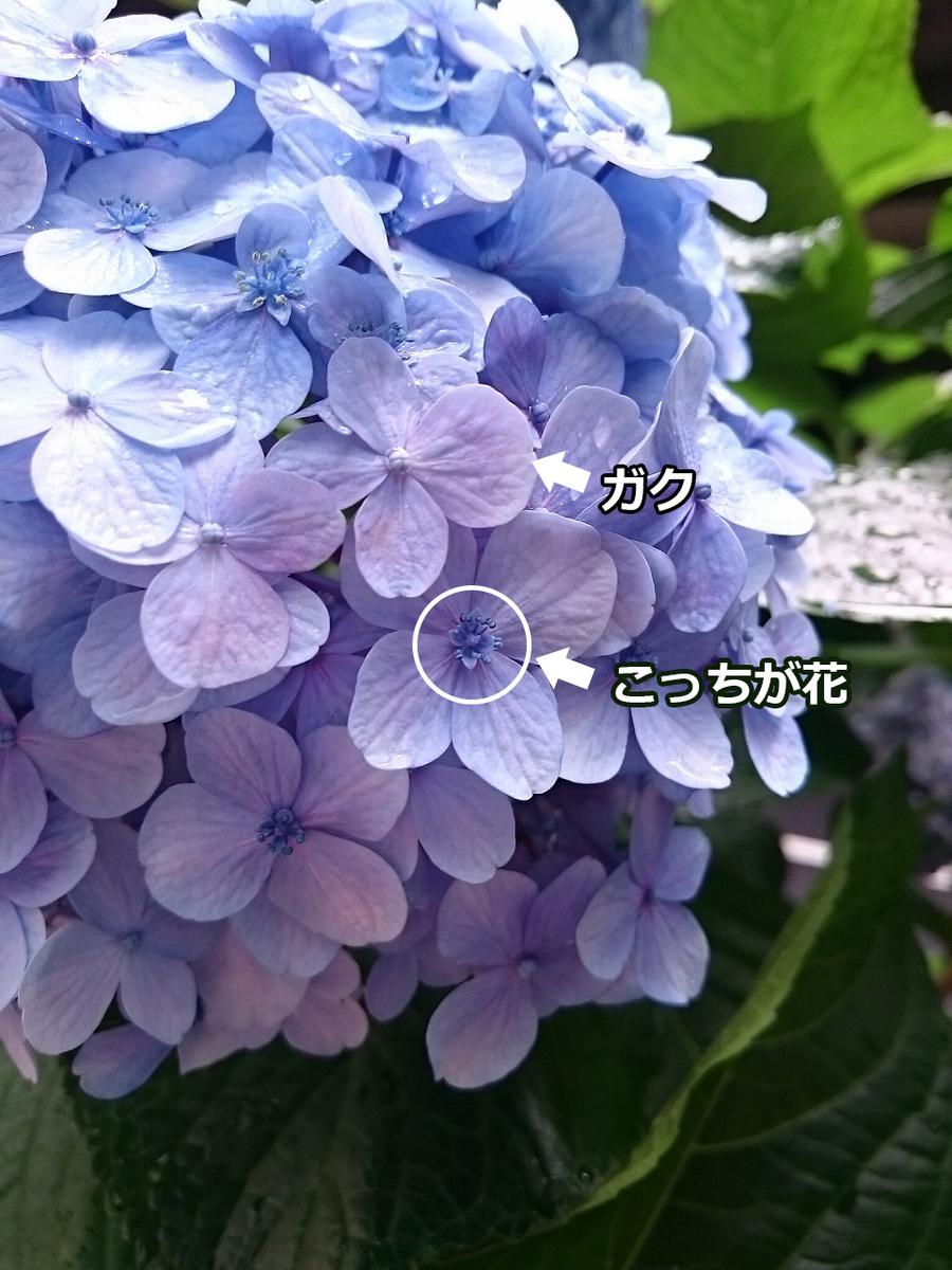 f:id:zetumetu_hakase:20190712224134j:plain