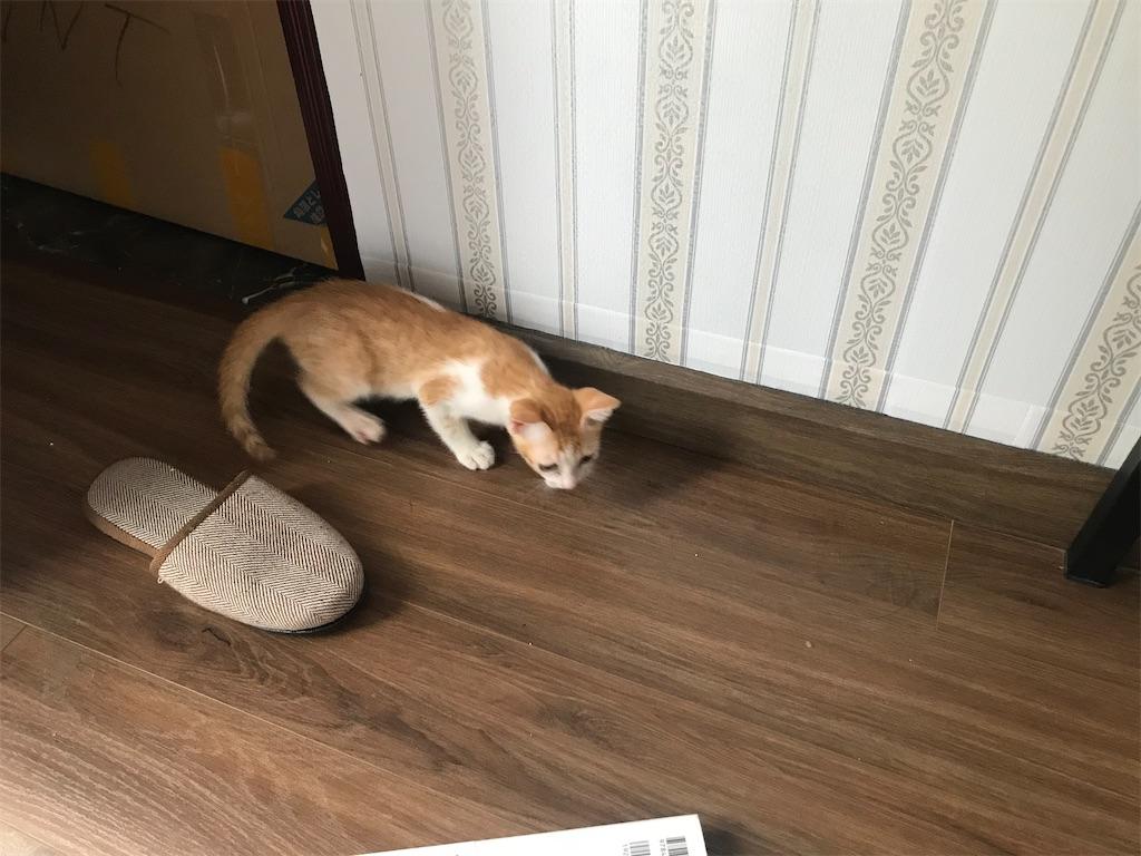 ホーチミンで猫の動物病院