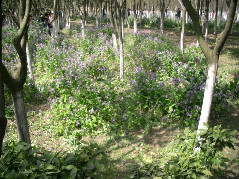 f:id:zhongwen:20120405083719j:image