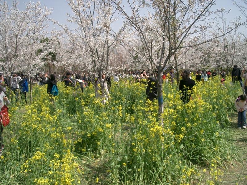 f:id:zhongwen:20120405084125j:image