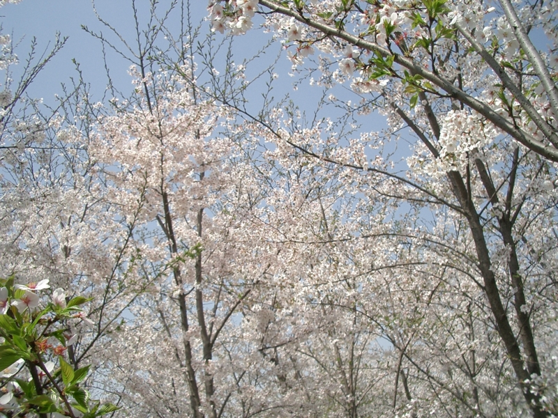 f:id:zhongwen:20120405084613j:image