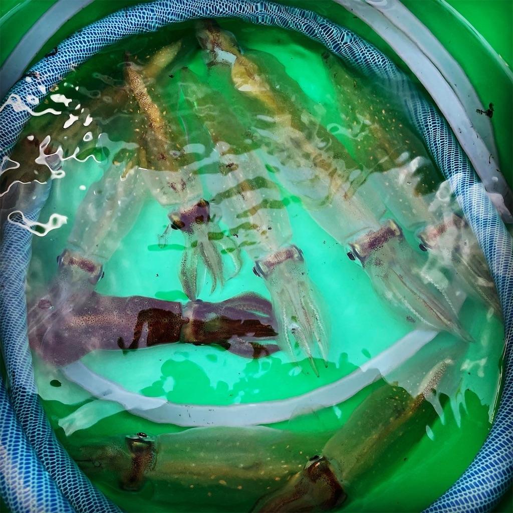 f:id:zima-gene:20210717150119j:image