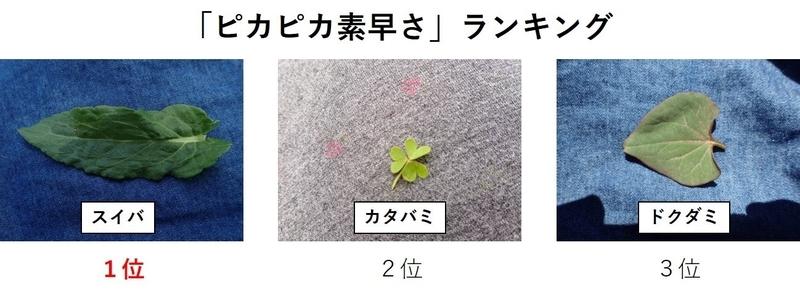 f:id:ziyukenkyu_Lab:20200604153151j:plain