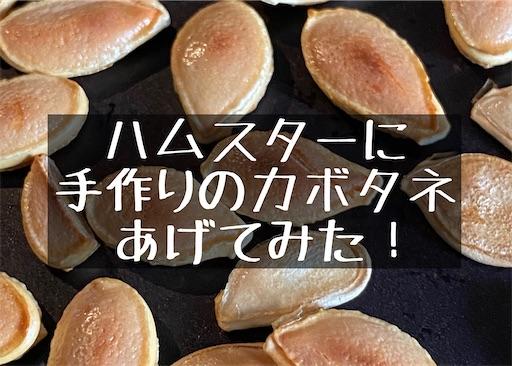 f:id:zizichan1103:20201122114947j:image