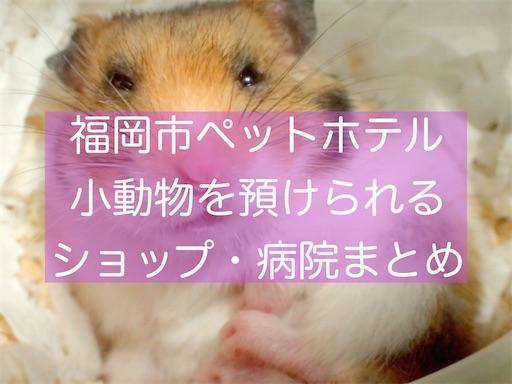 f:id:zizichan1103:20210329215418j:image