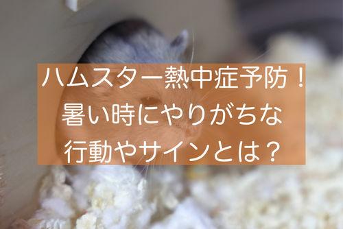 f:id:zizichan1103:20210715174808j:plain