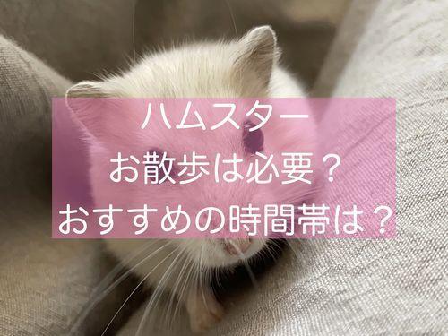 f:id:zizichan1103:20210725191431j:plain