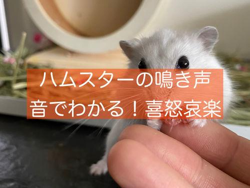 f:id:zizichan1103:20210818195050j:plain