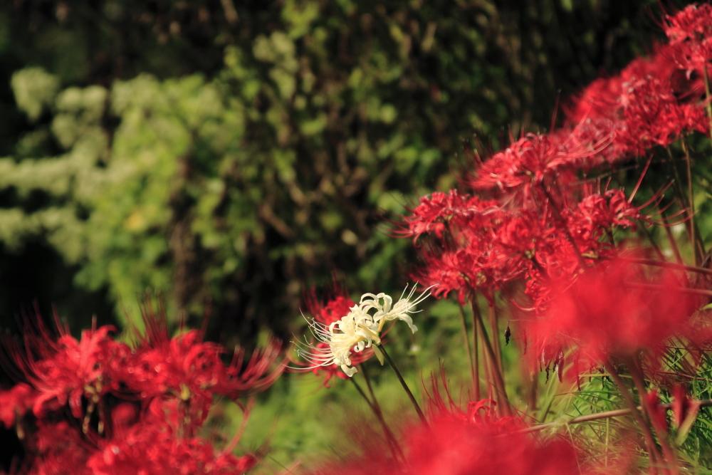 f:id:zoo_san:20111008090834j:image:w640