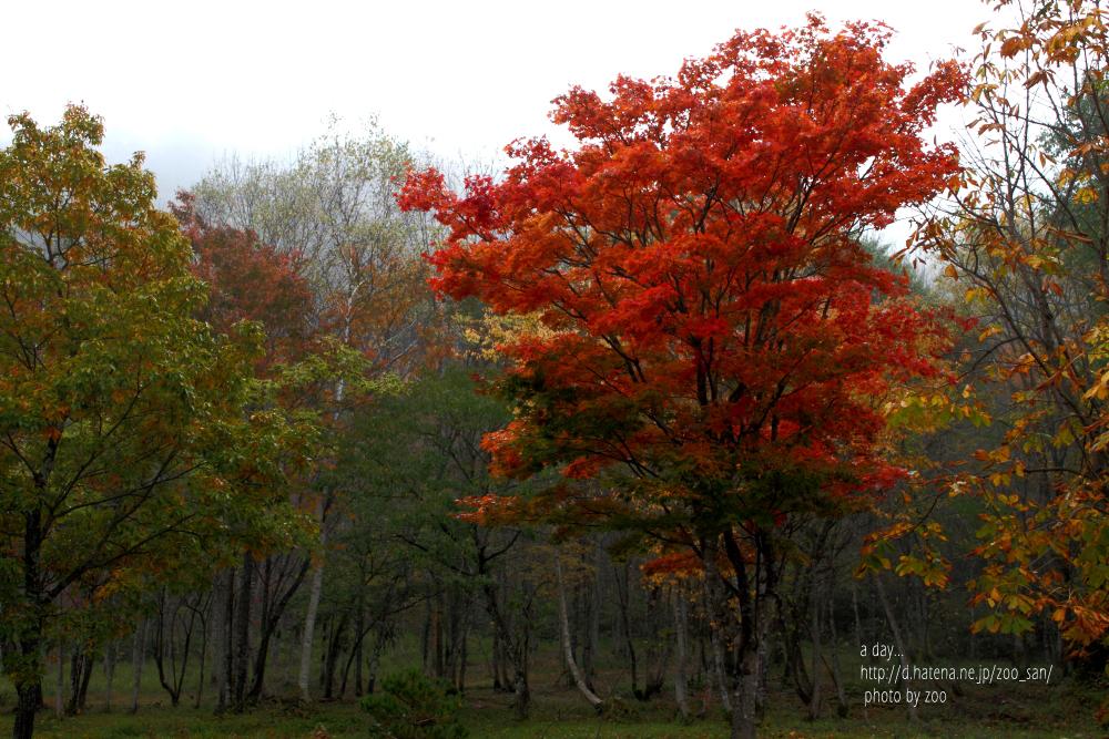f:id:zoo_san:20111020120652j:image:w640