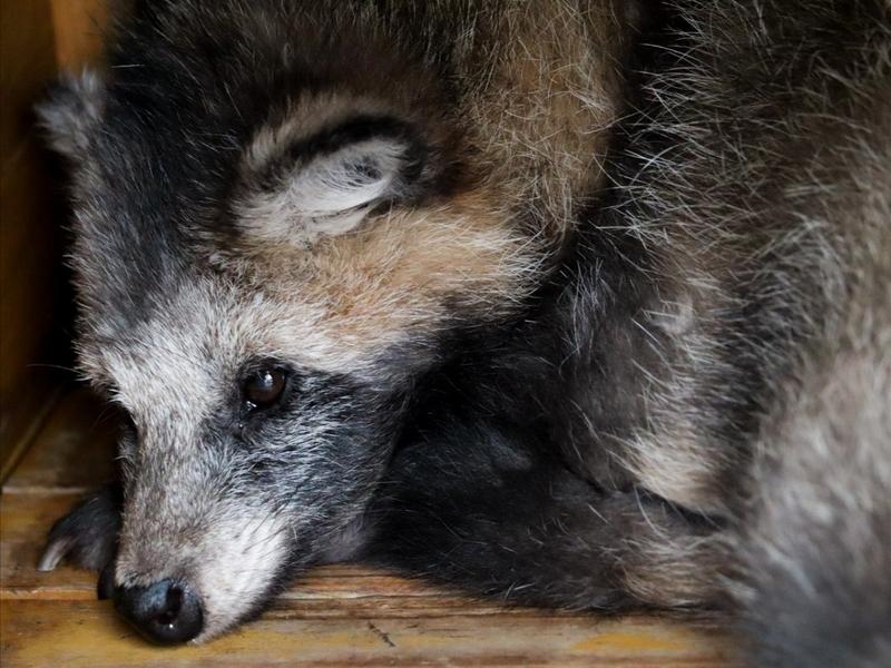 f:id:zoonimal:20200805231645j:plain
