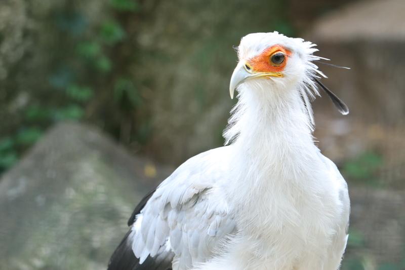 f:id:zoonimal:20200906141348j:plain