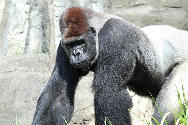f:id:zoonimal:20200906141547j:plain