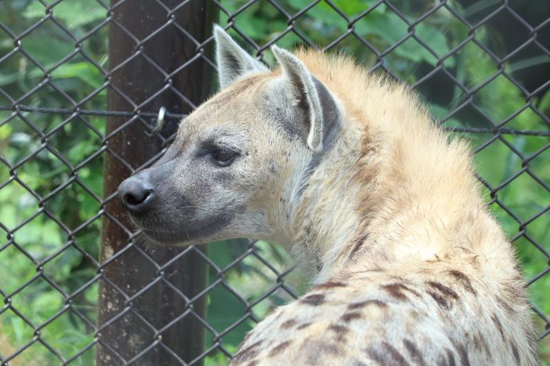 f:id:zoonimal:20200906141740j:plain