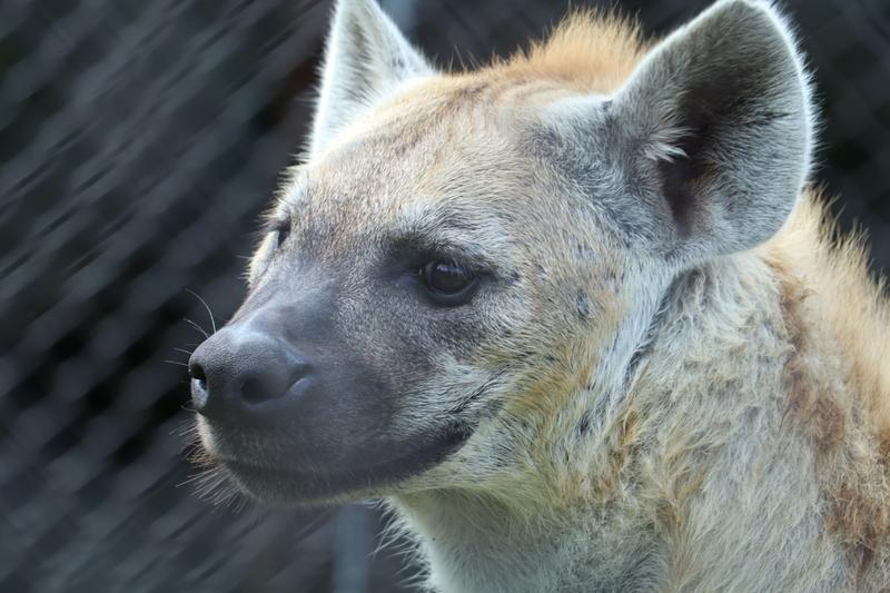 f:id:zoonimal:20200906141750j:plain
