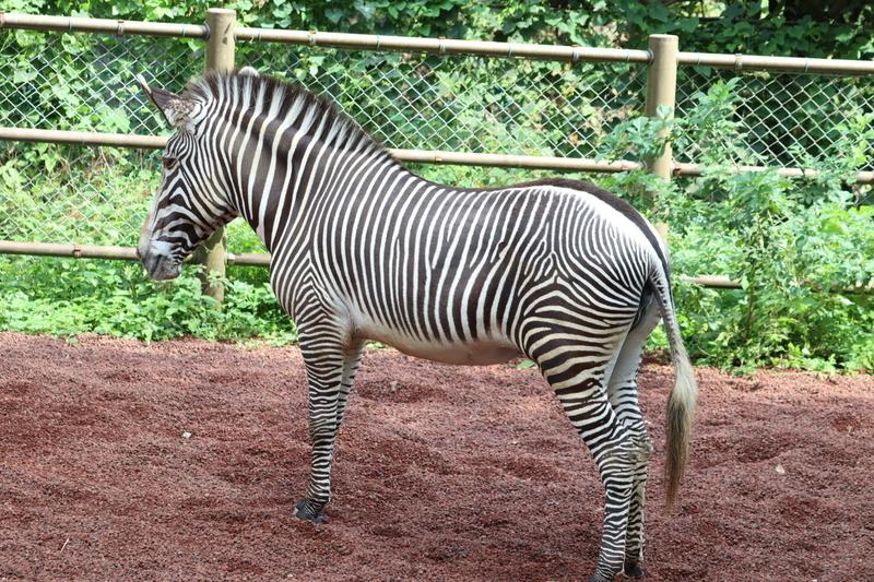 f:id:zoonimal:20200922170836j:plain