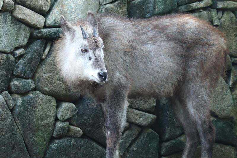 f:id:zoonimal:20200922170942j:plain