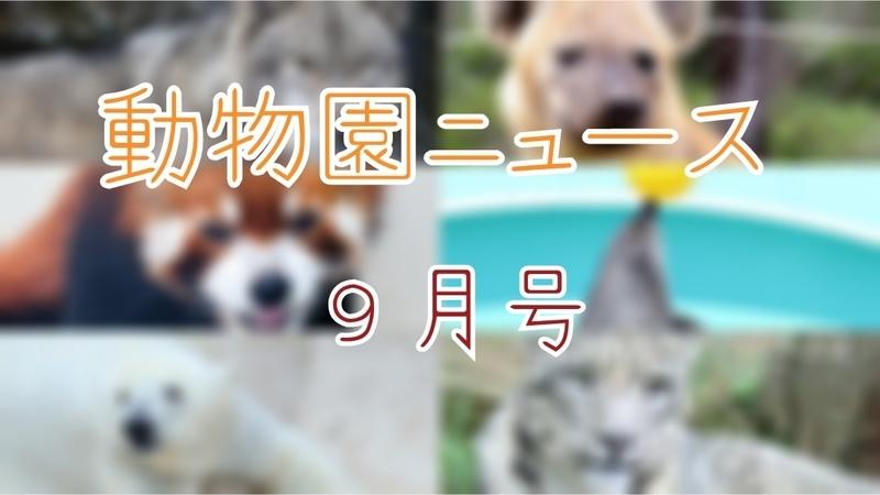 f:id:zoonimal:20200927151154j:plain