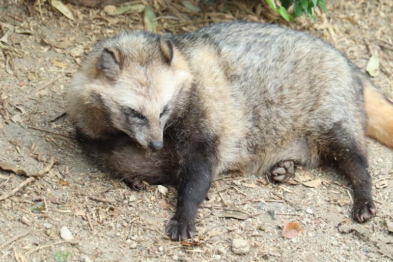 f:id:zoonimal:20201005234605j:plain