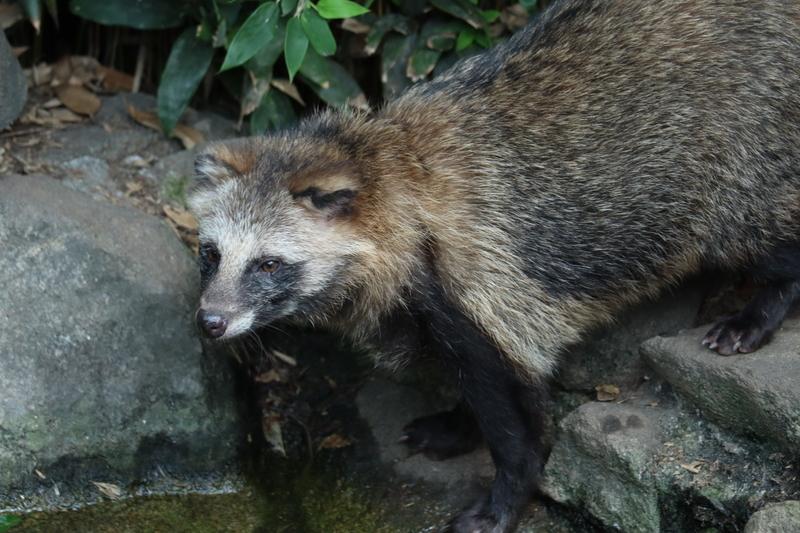 f:id:zoonimal:20201005234611j:plain