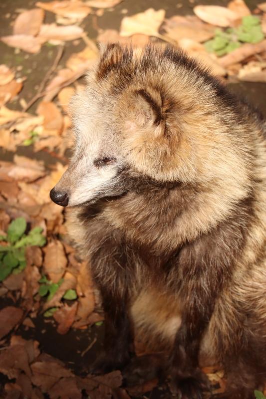 f:id:zoonimal:20201005235210j:plain
