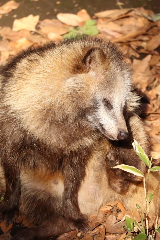 f:id:zoonimal:20201005235221j:plain