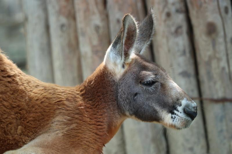 f:id:zoonimal:20201006001537j:plain